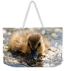 Weekender Tote Bag featuring the photograph Mallard Duckling by Sue Harper