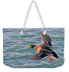 Mallard In Flight 3 Weekender Tote Bag
