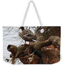 Weekender Tote Bag featuring the photograph Mallard by Kim Henderson