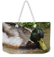 Weekender Tote Bag featuring the photograph Mallard Madness by Kathy Kelly