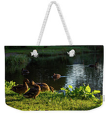 Mallards Enjoying The Morning Sun Weekender Tote Bag