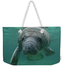 Manatee Weekender Tote Bag by Tim Fitzharris