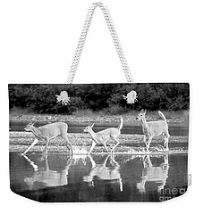Weekender Tote Bag featuring the photograph Many Glacier Deer 1 by Adam Jewell