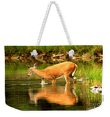 Weekender Tote Bag featuring the photograph Wading For Dinner by Adam Jewell