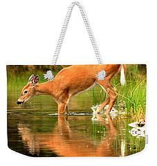 Weekender Tote Bag featuring the photograph Eating Off The Bottom Of Fishercap by Adam Jewell