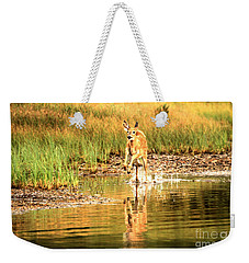 Weekender Tote Bag featuring the photograph Junior Dashing Through The Water by Adam Jewell