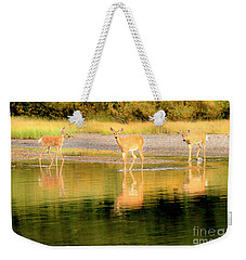 Weekender Tote Bag featuring the photograph Wading For Dinner In Fishercap by Adam Jewell