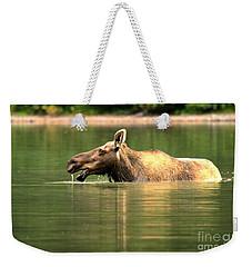 Many Glacier Moose 1 Weekender Tote Bag by Adam Jewell