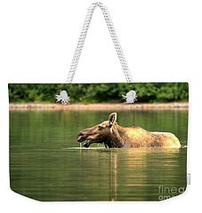 Many Glacier Moose 2 Weekender Tote Bag by Adam Jewell
