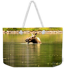 Weekender Tote Bag featuring the photograph Many Glacier Moose 3 by Adam Jewell
