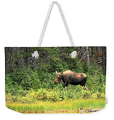 Weekender Tote Bag featuring the photograph Many Glacier Moose 5 by Adam Jewell