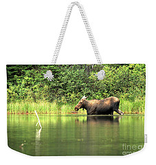 Weekender Tote Bag featuring the photograph Many Glacier Moose 6 by Adam Jewell