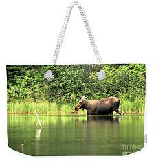 Many Glacier Moose 6 Weekender Tote Bag by Adam Jewell