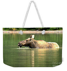 Weekender Tote Bag featuring the photograph Many Glacier Moose 7 by Adam Jewell