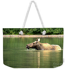 Weekender Tote Bag featuring the photograph Many Glacier Moose 8 by Adam Jewell
