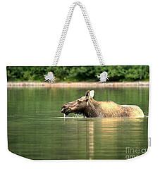Many Glacier Moose 8 Weekender Tote Bag by Adam Jewell