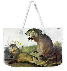 Maryland Marmot, Woodchuck, Groundhog Weekender Tote Bag