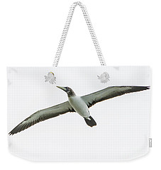 Weekender Tote Bag featuring the photograph Masked Booby 02 by Werner Padarin