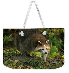 Weekender Tote Bag featuring the photograph Maskless Raccoon by Doris Potter