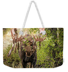 Weekender Tote Bag featuring the photograph Messy Moose by Mary Hone
