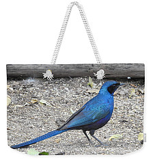 Weekender Tote Bag featuring the photograph Meve's Starling by Betty-Anne McDonald