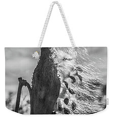 Milkweed Pod Back Lit B And W Weekender Tote Bag