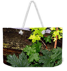 Weekender Tote Bag featuring the photograph Miniature Maple Leaves by Will Borden