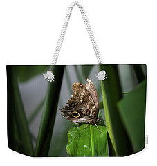 Weekender Tote Bag featuring the photograph Misty Morning Owl by Karen Wiles
