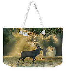 Weekender Tote Bag featuring the photograph Misty Walk by Scott Carruthers