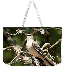 Weekender Tote Bag featuring the photograph Mockingbird  by Sheila Brown