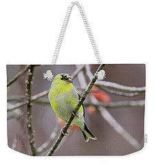 Weekender Tote Bag featuring the photograph Molting Gold Finch by Bill Wakeley