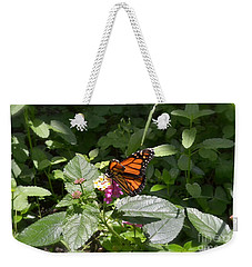Weekender Tote Bag featuring the photograph Monarch Butterfly Feeding by Carol  Bradley