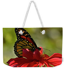 Weekender Tote Bag featuring the photograph Monarch On Red Zinnia by Ann Bridges