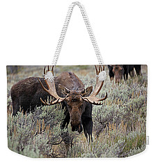 Moose In The Sage Weekender Tote Bag