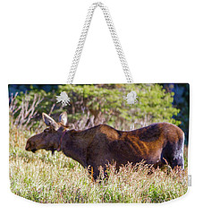 Moose In Waiting Weekender Tote Bag by Dawn Romine