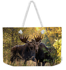Weekender Tote Bag featuring the photograph Moose Love by Mary Hone