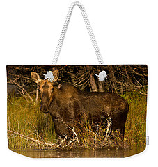 Moose Of Prong Pond Weekender Tote Bag