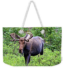 Weekender Tote Bag featuring the photograph Moose Trail by Scott Mahon