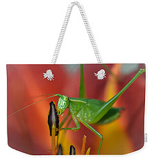 More Pollen Please Weekender Tote Bag by Amy Porter