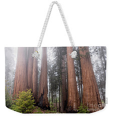 Weekender Tote Bag featuring the photograph Morning Light In The Forest by Peggy Hughes
