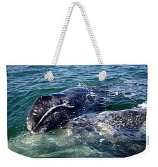 Mother Grey Whale And Baby Calf Weekender Tote Bag