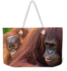 Mother Orangutan With Baby Weekender Tote Bag by John Black