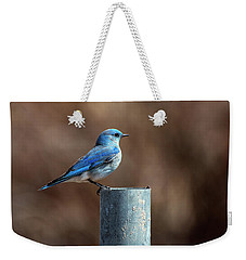Mountain Bluebird Weekender Tote Bag by Eric Nielsen