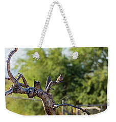 Mourning Dove In Old Tree Weekender Tote Bag