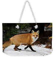 Weekender Tote Bag featuring the photograph Mr Fox by Mircea Costina Photography