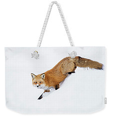 Weekender Tote Bag featuring the photograph Mr Sly by Mircea Costina Photography