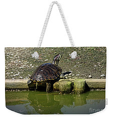 Weekender Tote Bag featuring the photograph Mr. Turtle by Melissa Messick