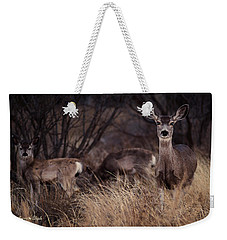 Mule Deer Mama And Twins Weekender Tote Bag