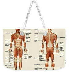 Weekender Tote Bag featuring the photograph Muscular System by Gina Dsgn