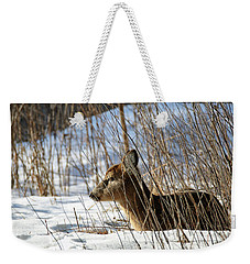Napping Fawn Weekender Tote Bag by Brook Burling